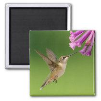 Beautiful Hummingbird Nature Scenery Magnet