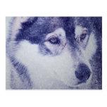 Beautiful husky dog portrait postcard