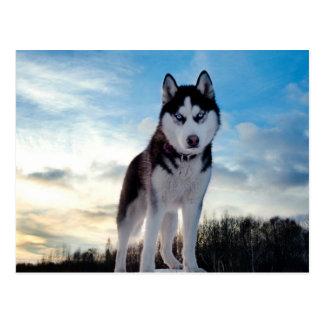 Beautiful Husky Dog Postcard