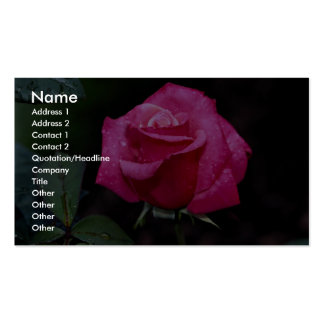 Beautiful Hybrid Tea Rose 'First Prize' Double-Sided Standard Business Cards (Pack Of 100)