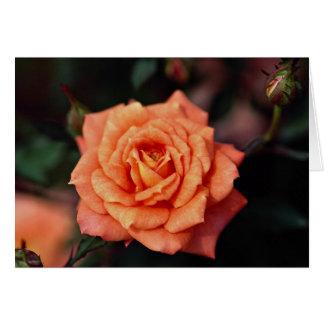 Beautiful Hybrid Tea Rose Greeting Card