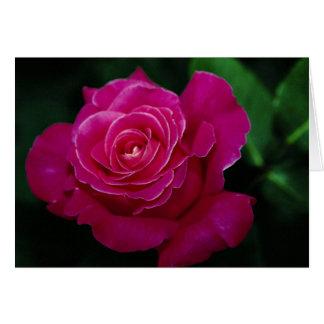 Beautiful Hybrid Tea Rose 'Pink Peace' Greeting Card