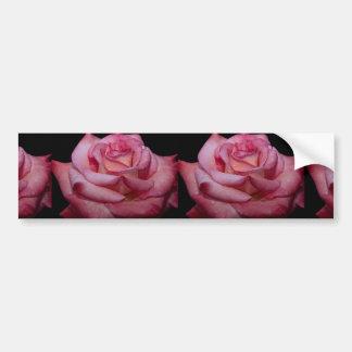 Beautiful Hybrid Tea Rose Sheer Elegance Bumper Sticker
