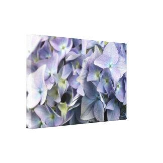 Beautiful Hydrangea Canvas Print