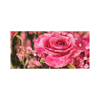 Beautiful in Pinks Rose Canvas Canvas Prints