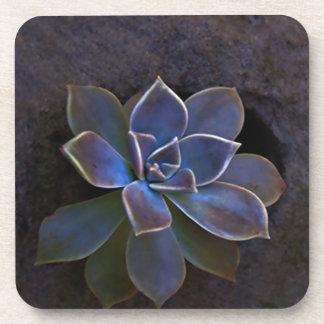 Beautiful Indigo cactus flower Beverage Coaster