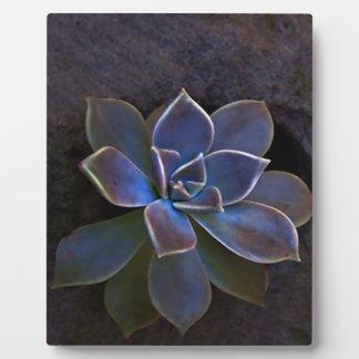 Beautiful Indigo cactus flower Plaque