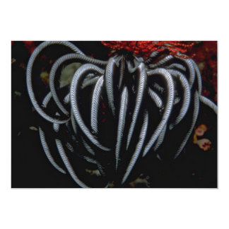 Beautiful Indo-Pacific feather star 5x7 Paper Invitation Card