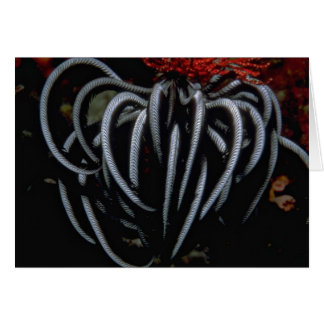 Beautiful Indo-Pacific feather star Greeting Card