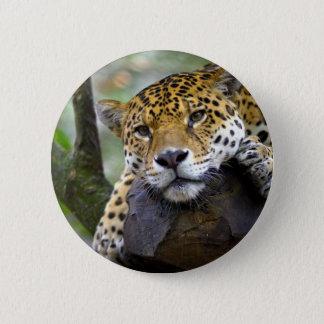 Beautiful jaguar relaxing in tree button