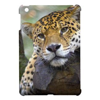Beautiful jaguar relaxing in tree cover for the iPad mini