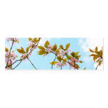Beautiful Japanese cherry blossom Double-Sided Mini Business Cards (Pack Of 20)
