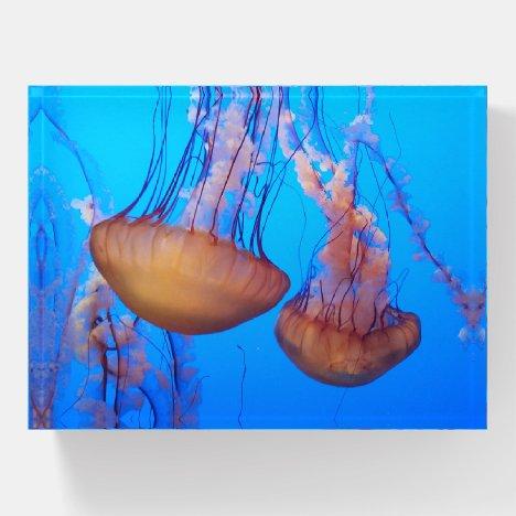 Beautiful Jellyfish Paperweight