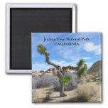 Beautiful Joshua Tree Magnet! 2 Inch Square Magnet