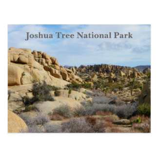 Beautiful Joshua Tree Postcard! Postcard