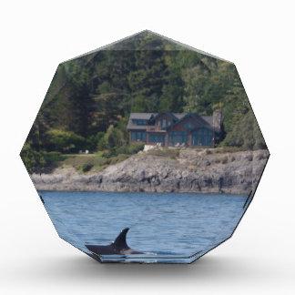 Beautiful Killer Whale Orca in Washington State Award