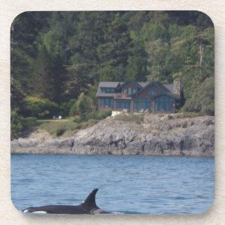 Beautiful Killer Whale Orca in Washington State Beverage Coaster