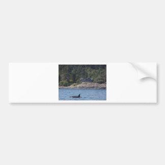 Beautiful Killer Whale Orca in Washington State Bumper Sticker
