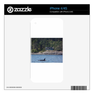 Beautiful Killer Whale Orca in Washington State Decal For iPhone 4