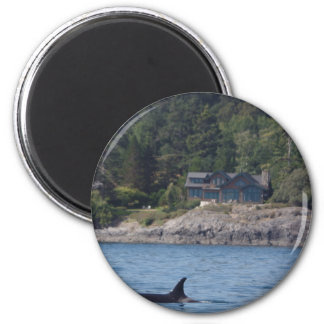 Beautiful Killer Whale Orca in Washington State Magnet