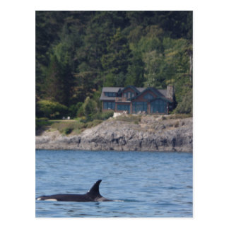 Beautiful Killer Whale Orca in Washington State Postcard