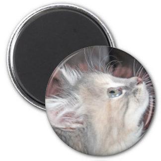 beautiful kitten magnets