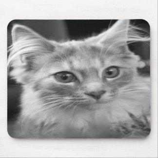 beautiful kitten mouse pad