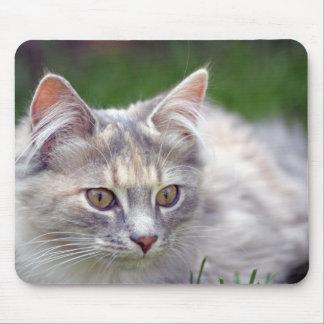 beautiful kitten mousepad