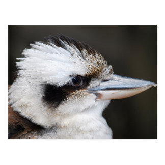Beautiful kookaburra bird side portrait postcard