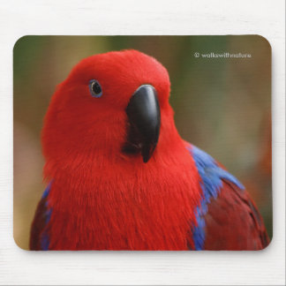 """Beautiful """"Lady in Red"""" Eclectus Parrot Mouse Pad"""