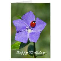 Beautiful Ladybug on Periwinkle Birthday Card