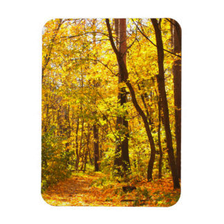 Beautiful Landscape - Road In Autumn Forest Rectangular Photo Magnet