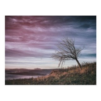 Beautiful landscape with crooked tree photo postcard