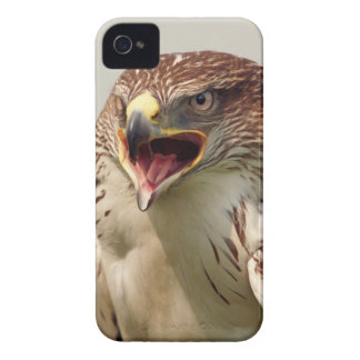 Beautiful Lanner Falcon iPhone 4/4S Barely There iPhone 4 Cover