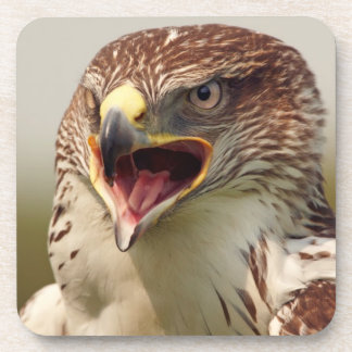 Beautiful Lanner Falcon Set of 6 Coasters