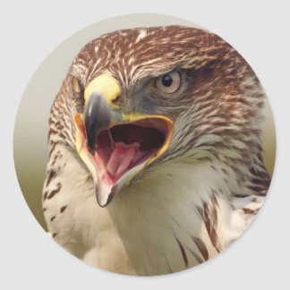 Beautiful Lanner Falcon Stickers
