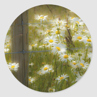 Beautiful Large Daisies Stickers