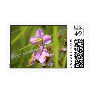 Beautiful lavendar wild flower postage