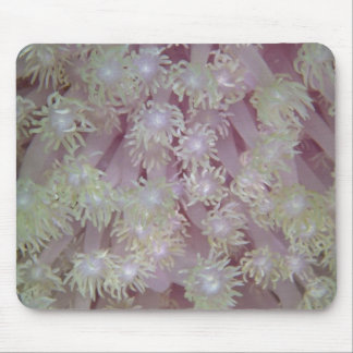 Beautiful Lavender coral polyps from the Red Sea Mouse Pad