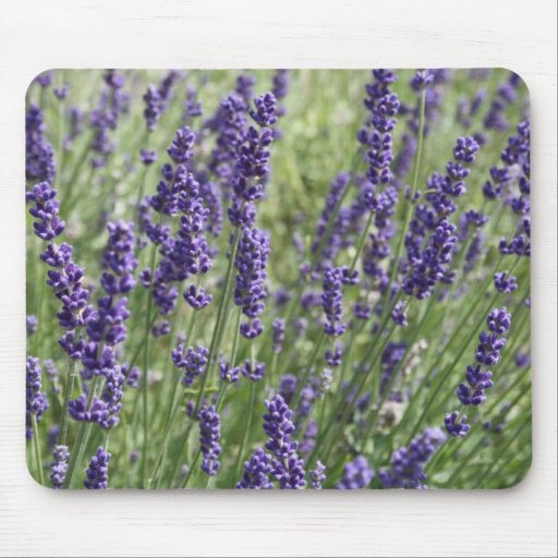 Beautiful Lavender Flower Mouse Pad