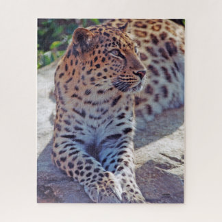 Beautiful Leopard - Jigsaw Puzzle
