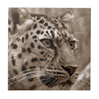 Beautiful leopard portrait sepia tile