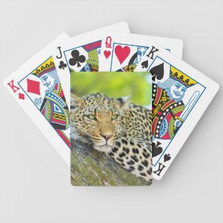Beautiful leopard with green eyes card decks