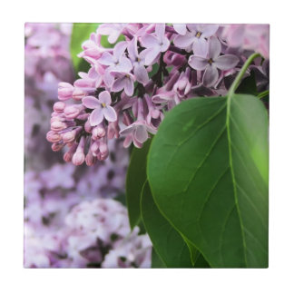 Beautiful Lilac Bloom Tile