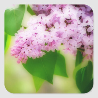 Beautiful Lilacs Square Stickers
