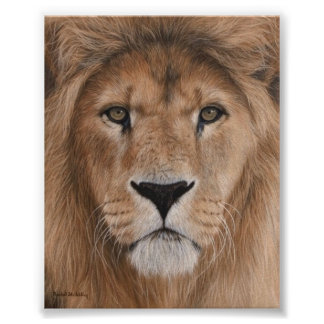 Beautiful Lion Head Poster