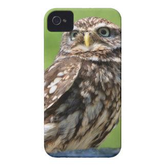 Beautiful little owl bird iphone 4 case mate