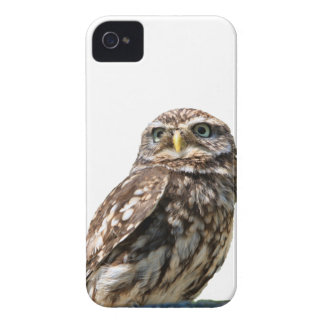 Beautiful little owl  photo blackberry bold case