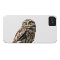 Beautiful little owl  photo blackberry bold case