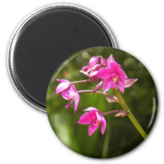 Beautiful Little Pink Tropical Flower 2 Inch Round Magnet